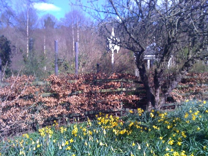 Daffodilwalk